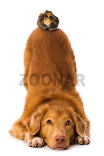 Dog makes a servant on white background