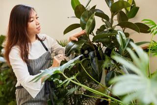 Frau als Floristin bei der Pflege von Grünpflanzen