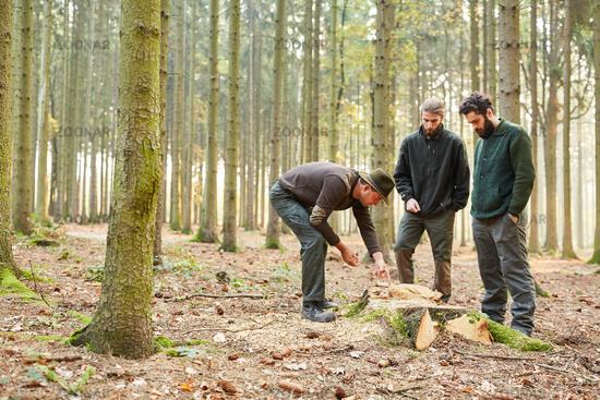 Revierförster bei Prüfung von Holz Qualität von Baum