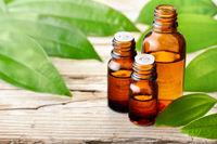 cinnamon leaf essential oil and fresh cinnamon leaves on the wooden board