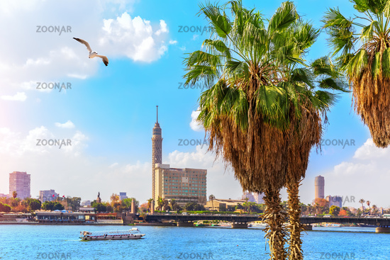 Palms by the Nile in Cairo and the Tower in the background, Egypt