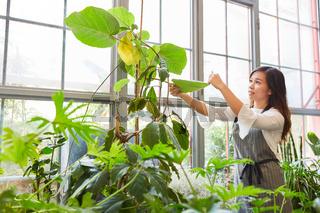 Floristin oder Gärtnerin kontrolliert Grünpflanzen