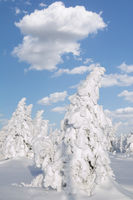Winter Landscape on Brocken Mountain,Harz National Park,Saxony-Anhalt,Germany