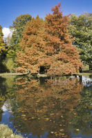 autumn tree imirroring in a pond