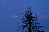 Lunar eclipse, plateau of the Frankenalb, Pommelsbrunn, Hersbrucker Schweiz, Bavaria