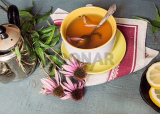 Echinacea is a medicinal herb with immune stimulating effects