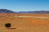 Namibian landscape with dunes and a tree