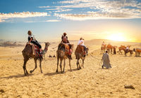 Camels and tourists