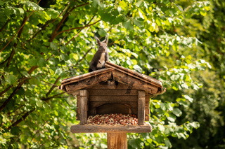 A squirrel hangs from a birdhouse