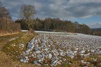Field path with field and tree, Wildenhof, Koenigstein/Opf. , Oberpfalz, Bavaria