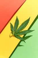 Green marijuana leaf on a tricolor background with hard shadows.