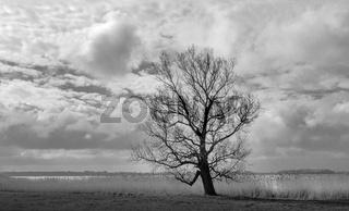 Baum am Tetzitzer See