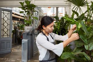 Floristin bei der Pflege von Grünpflanzen