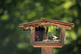 A sweet squirrel sits in a birdhouse and eats