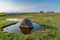 Erratic boulder in a puddle on a meadow on the eastern coast of Öland, Sweden.