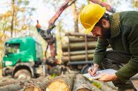 Forstwirt kontrolliert das Verladen von Langholz