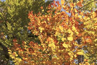 Herbstfarben, Details
