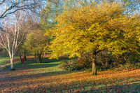 Beautiful Autumn at Grove Park, Birmingham, UK
