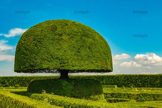 mushroom shaped tree