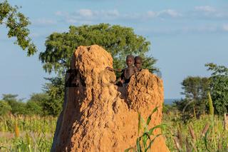 Himba boys, indigenous namibian ethnic people, Africa