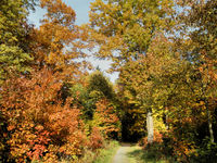 Forest way in autumn forest