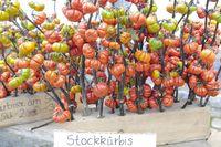 stick pumpkin