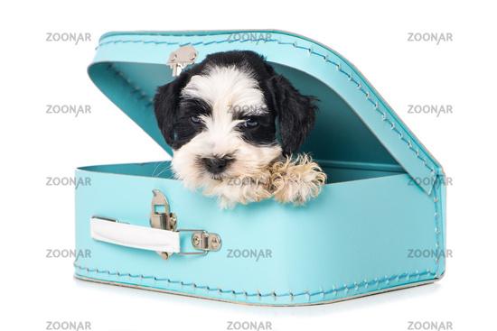 Cute puppy in a blue suitcase