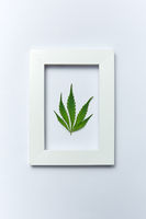 Green cannabis leaf in a rectangular frame on a light grey background.