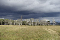 High Fens * Eifel *, raising bog with dark clouds above