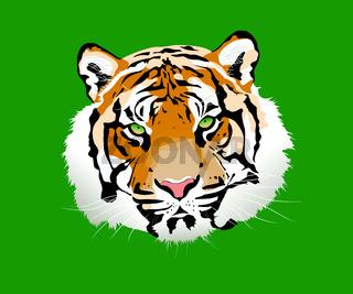 The tiger vector illustration