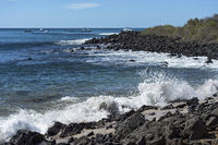 Waves breaking at the lava rocks of the coast, Floreana  Island, Galapagos Islands, Ecuador