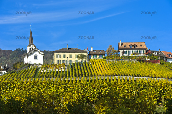 Wine-producing village Féchy-Dessus in the wine-growing area La Côte, Fechy, Vaud, Switzerland