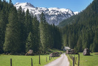 Road toward the green forest and the Swiss Alps. Spring landscape in the mountains.