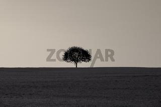 Single tree on a grass field at sunrise
