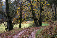 Autumnal trees along the hiking trail, alluvial forest, Upper Pegnitztal, Frankenalb, Bavaria
