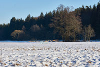 Floodplain forest at the upper Pegnitz valley, Fraenkische Alb, Franconia, Bavaria.