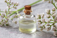 A bottle of valerian essential oil with valerian twigs