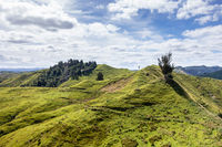 typical rural landscape in New Zealand