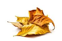Pile of dry leaf