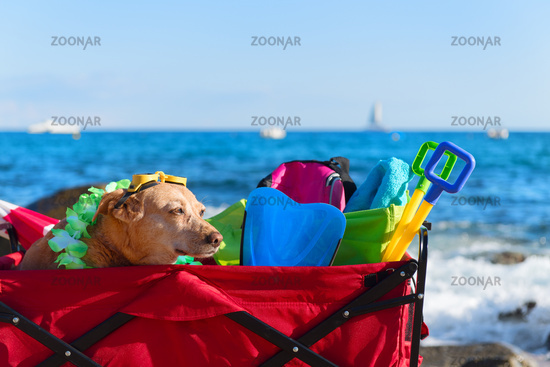 Funny dog with goggles at beach