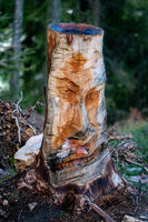 Funny face carved in a wooden tree trunk growing in a forest