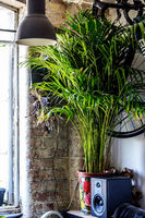 Trendy, hipster flat with green plam tree, houseplant in a beautiful rosy pot