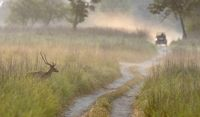 Misty morning at Dhikala, Corbett, India