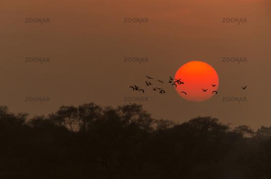 Birds at Sunset, Bharatpur, Rajasthan, India