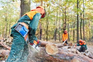 Gruppe Waldarbeiter beim Sägen von Baumstämmen