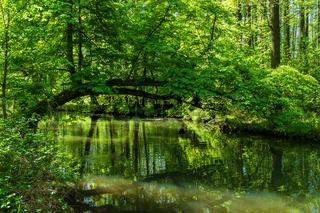 Landschaft im Spreewald bei Lübbenau