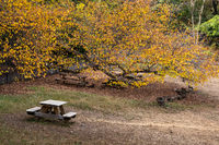 Fall foliage color of Fort Tryon Park in Fort George Manhattan