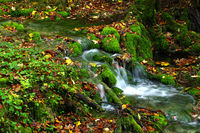 Water flows over moss cushions and colourful autumn leaves,