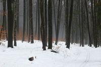 Snow-covered winter forest near Pommelsbrunn, Franconia, Frankenalb, Bavaria