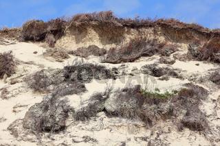 Abbruchkante an einer Düne auf Sylt nach einem Sturm